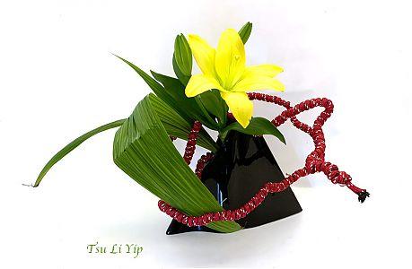 Tsui Li Yip