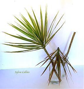 Sylvie Collins